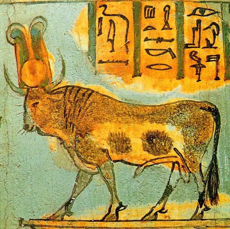 Фауна Египта - Какие животные обитают в Египте? 2