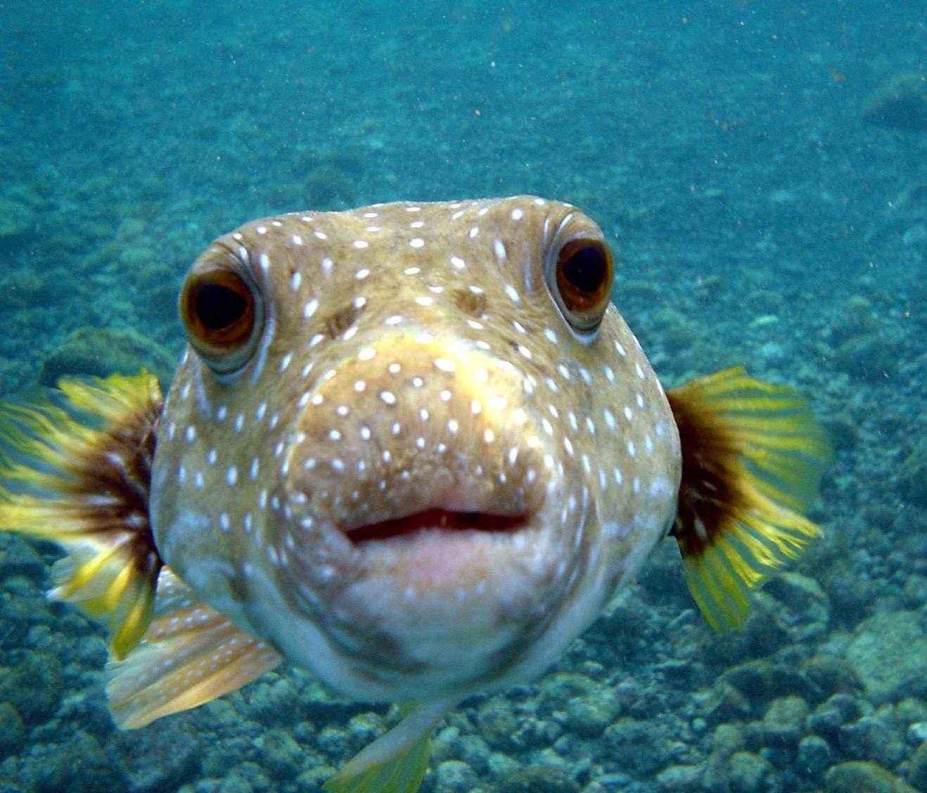 ТОП-16 смертоносных и ядовитых рыб на Земле 11