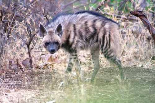 Животный мир Кавказа - список, характеристика и фото 15