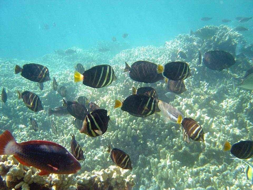 ТОП-16 смертоносных и ядовитых рыб на Земле 13