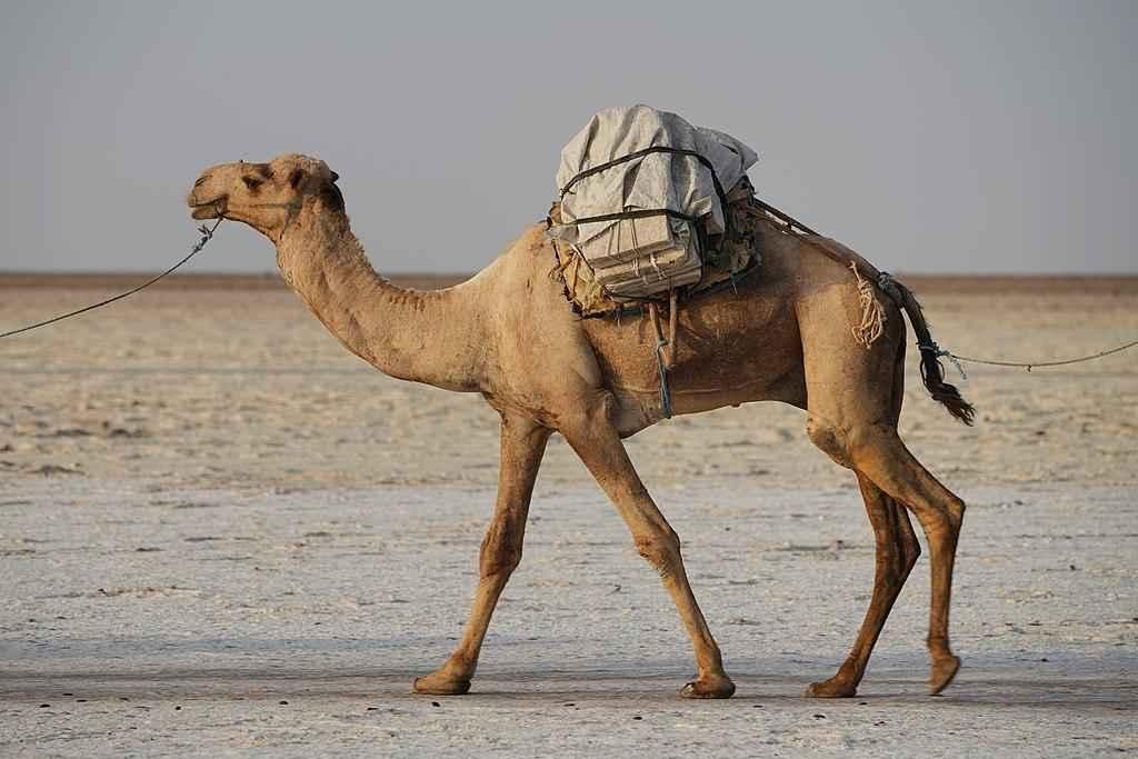 Фауна Египта - Какие животные обитают в Египте? 4