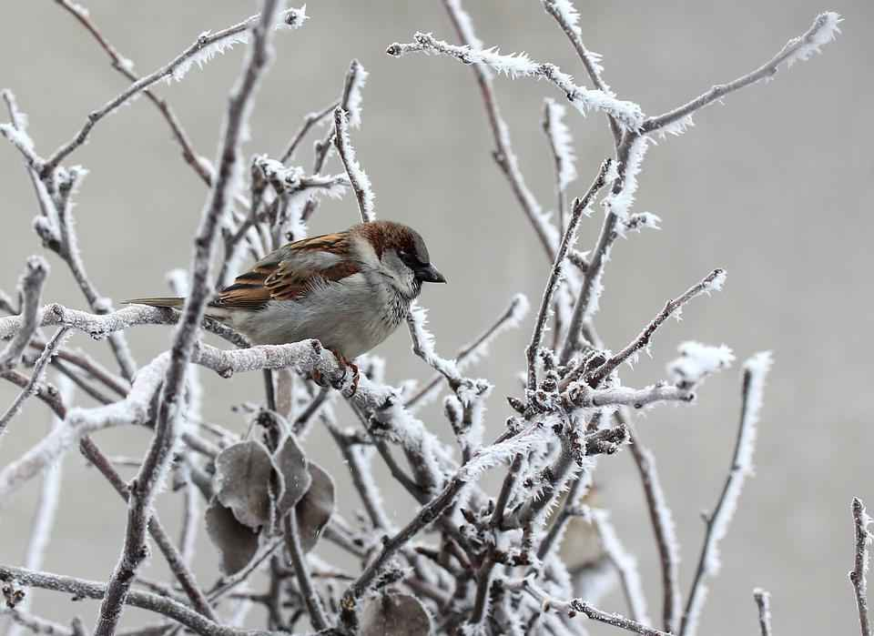 Как дикие животные готовятся к зимним холодам? 2