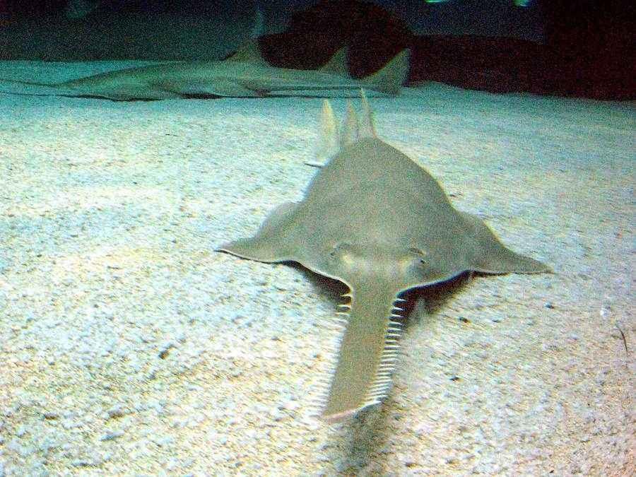 ТОП-16 смертоносных и ядовитых рыб на Земле 17
