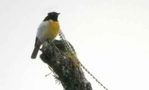ТОП 25 самых редких видов птиц на планете - названия, описания и фото 14