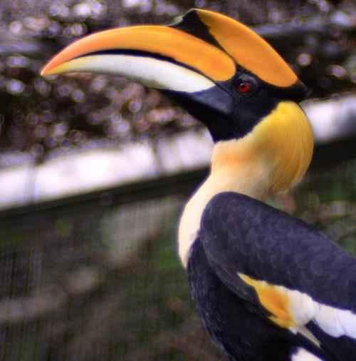 ТОП 25 самых редких видов птиц на планете - названия, описания и фото 22