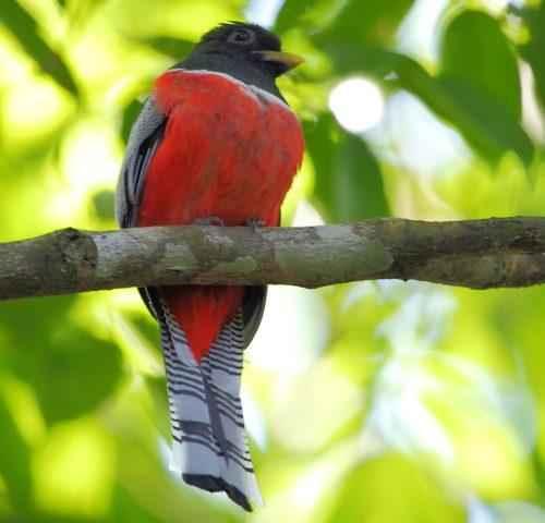 ТОП 25 самых редких видов птиц на планете - названия, описания и фото 23