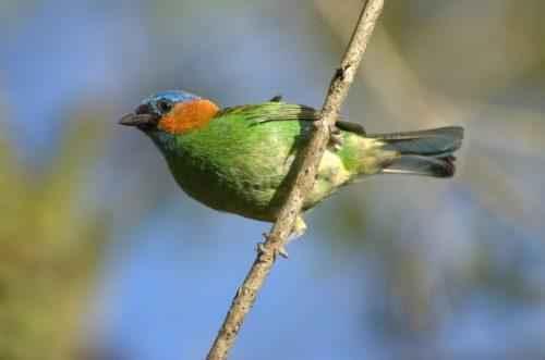 ТОП 25 самых редких видов птиц на планете - названия, описания и фото 26