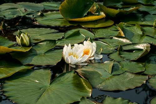 Флора и фауна болота - Какие животные обитают на болоте? 8