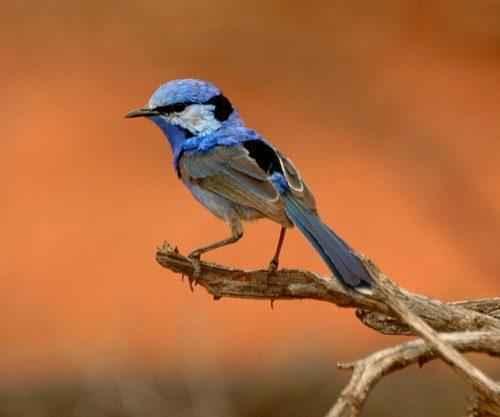 ТОП 25 самых редких видов птиц на планете - названия, описания и фото 12