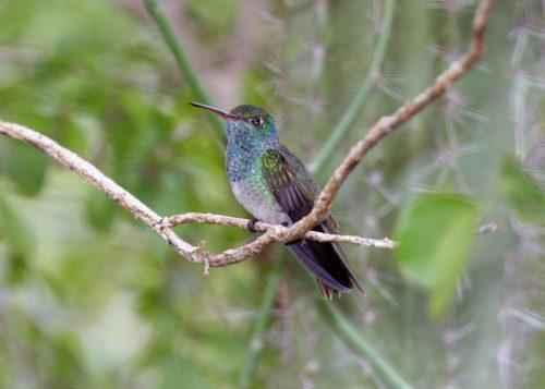 ТОП 25 самых редких видов птиц на планете - названия, описания и фото 6