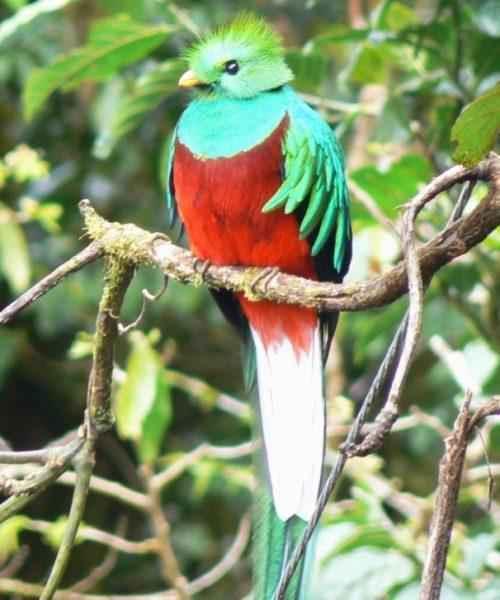 ТОП 25 самых редких видов птиц на планете - названия, описания и фото 15