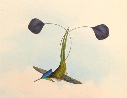 ТОП 25 самых редких видов птиц на планете - названия, описания и фото 5