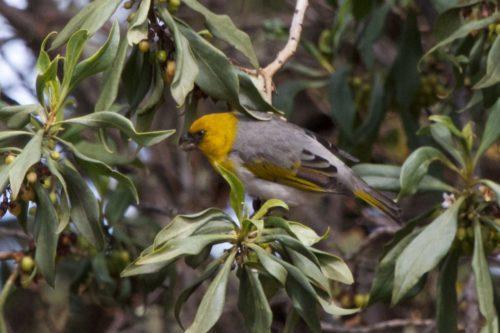 ТОП 25 самых редких видов птиц на планете - названия, описания и фото 4