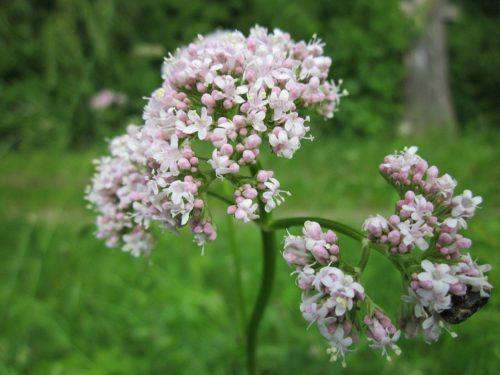 Флора и фауна болота - Какие животные обитают на болоте? 11