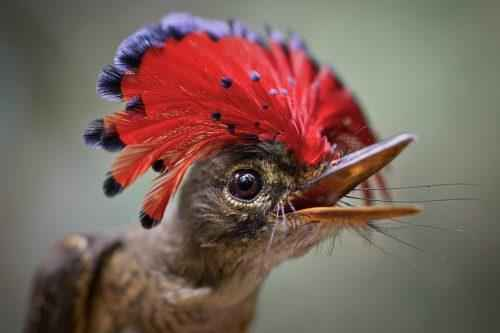 ТОП 25 самых редких видов птиц на планете - названия, описания и фото 13