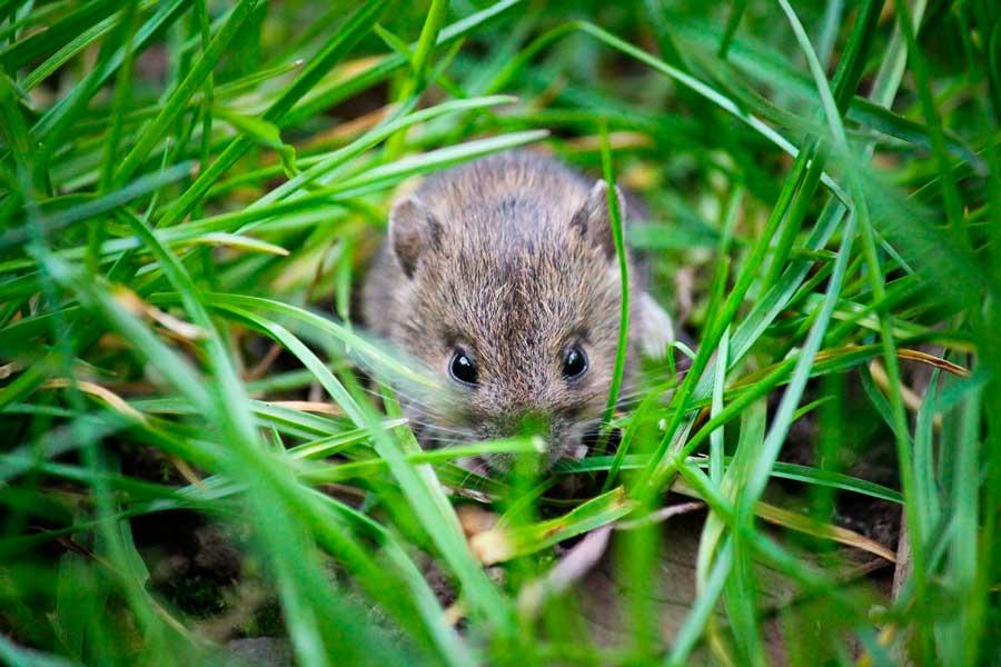 Фауна полей - Какие животные обитают на полях? 2