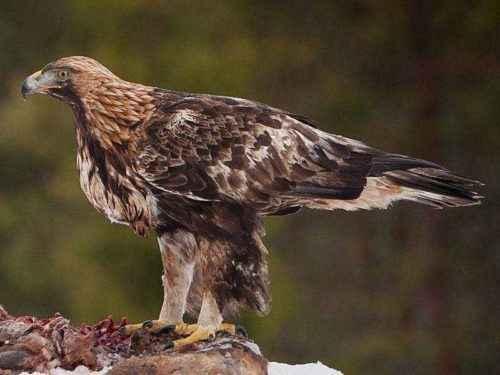 Редкие животные из Красной книги Краснодарского края - список, характеристика и фото 10