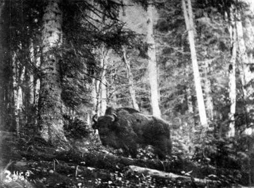 Какие животные занесены в черную книгу мира? Виды, фото и описание 12