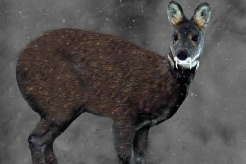 Редкие животные из Красной книги Алтайского края — список, характеристика и фото 7