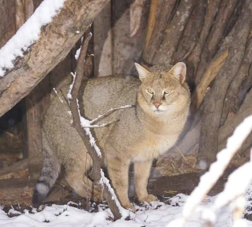 Редкие животные из Красной книги Ставропольского края  — список, характеристика и фото 2