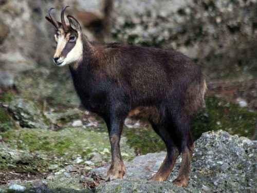 Животный мир Кавказа - список, характеристика и фото 2