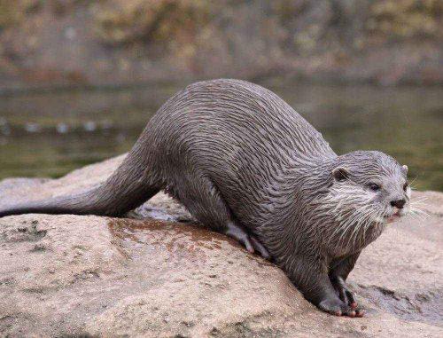 Редкие животные из Красной книги Краснодарского края - список, характеристика и фото 7