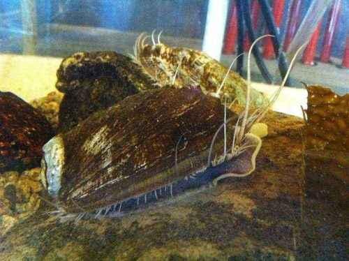 Класс гастроподы: описание, типы, особенности и фото брюхоногих моллюсков 11