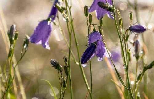Флора Кавказа — список, характеристика и фото 11