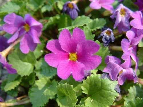 Флора Кавказа — список, характеристика и фото 6