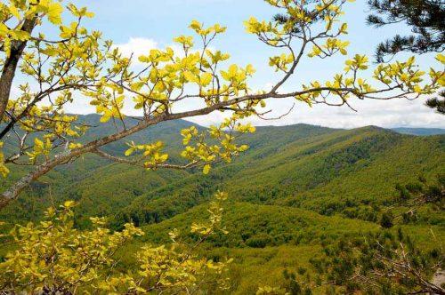 Какие крупные природные комплексы выделяют на территории России? 3