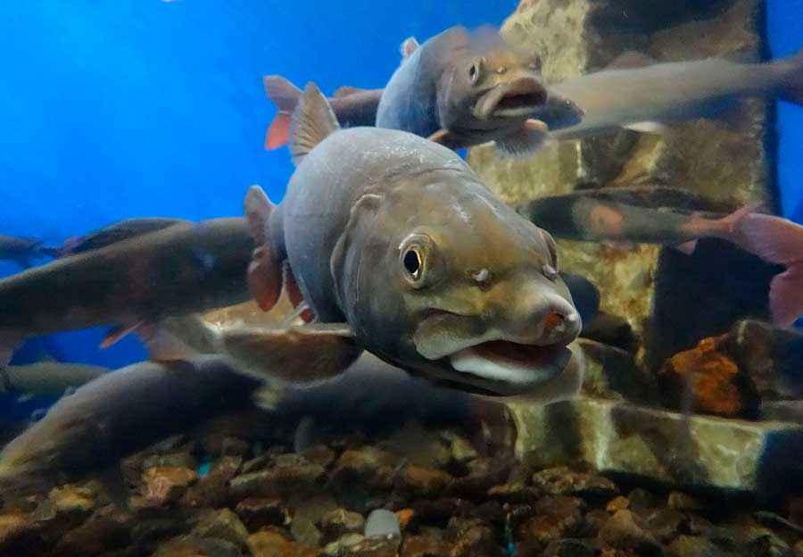 рыбы байкала фото используются чаще всего