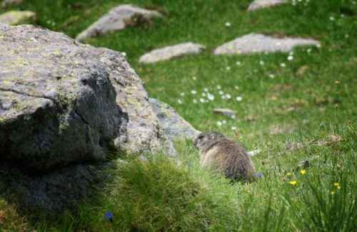 Животный мир Кавказа - список, характеристика и фото 9