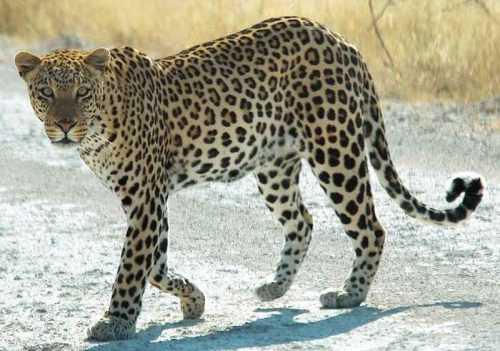 Животный мир Кавказа - список, характеристика и фото 13