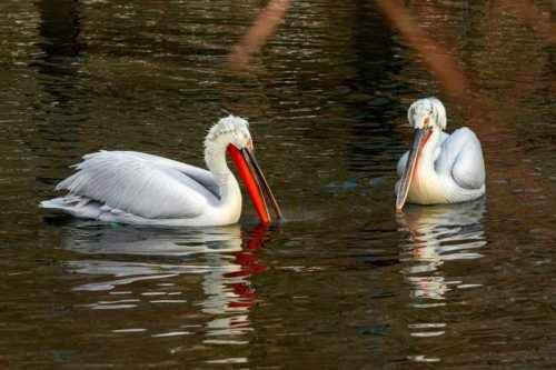 Морские птицы: описание, представители и фото 4