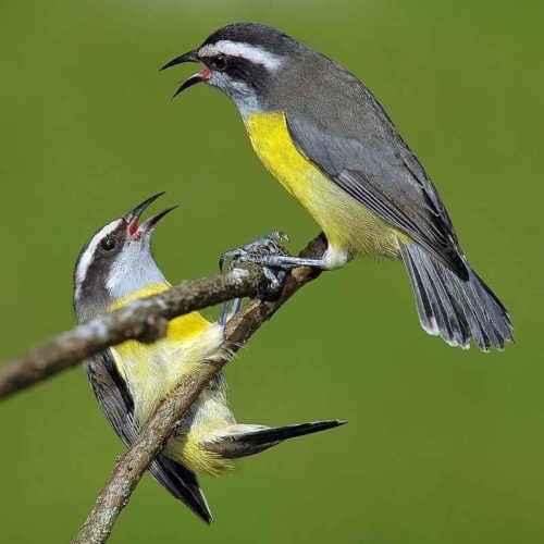 ТОП 16 самых маленьких птиц в мире - список видов, характеристика и фото 5