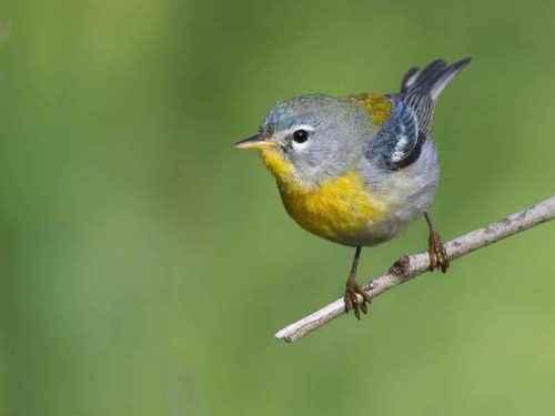 ТОП 16 самых маленьких птиц в мире - список видов, характеристика и фото 2