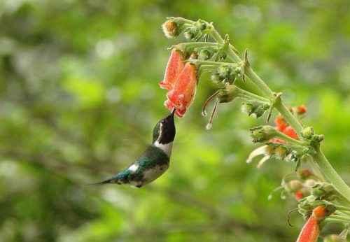 ТОП 16 самых маленьких птиц в мире - список видов, характеристика и фото 14