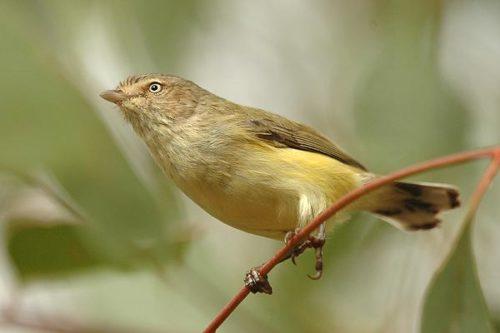 ТОП 16 самых маленьких птиц в мире - список видов, характеристика и фото 11
