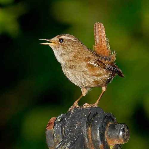 ТОП 16 самых маленьких птиц в мире - список видов, характеристика и фото 9