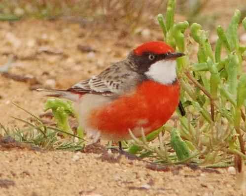 ТОП 16 самых маленьких птиц в мире - список видов, характеристика и фото 4