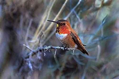 ТОП 16 самых маленьких птиц в мире - список видов, характеристика и фото 13