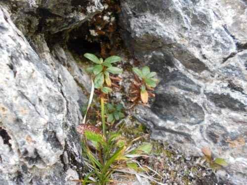 Редкие растения из Красной книги Красноярского края — список, характеристика и фото 5
