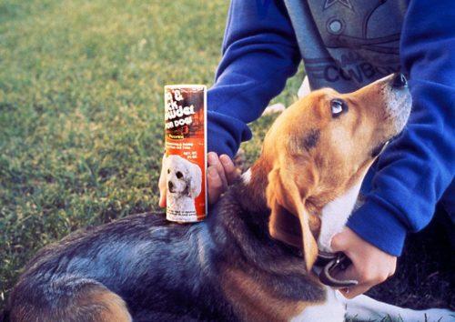 Как избавиться от блох у собаки? 3