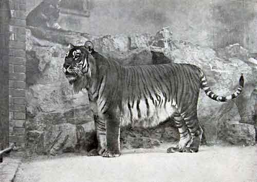 Какие животные занесены в черную книгу мира? Виды, фото и описание 13
