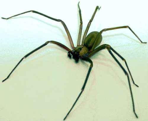 Какой паук самый ужасный и странный на Земле - фото и описание страшных на вид пауков 3