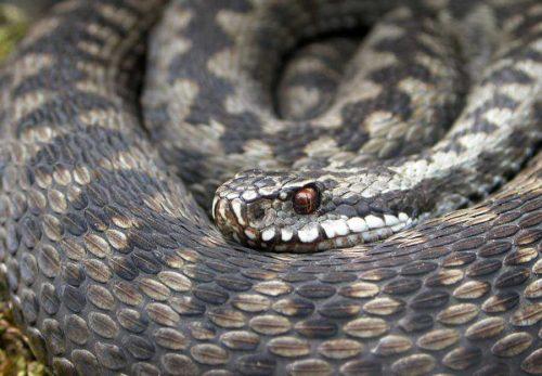 Какие виды животных самые опасные на Земле - список, характеристика и фото 7