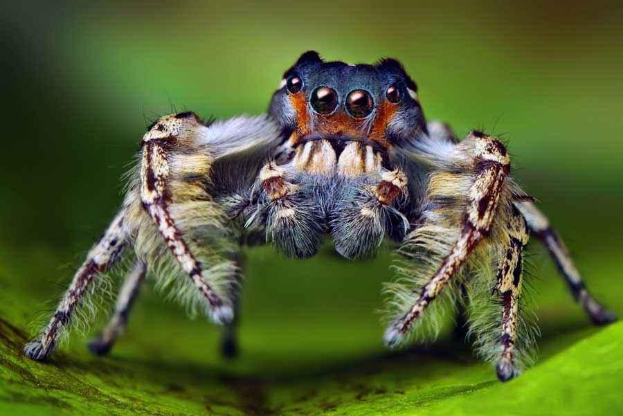 самые картинки пауки расскажем, как спрятать