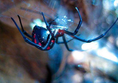 Какие ядовитые виды пауков есть в России — список, характеристика и фото зверушки,живность,питомцы,Животные