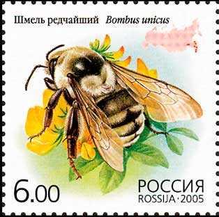 Редкие животные из Красной книги Приморского края — список, характеристика и фото 18