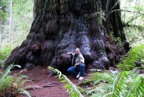 Какие деревья самые высокие на Земле - список, характеристика и фото 5